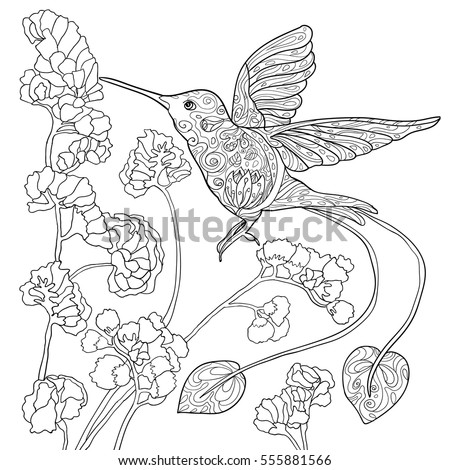 Coloring Book Page Adult Flying Hummingbird Stock Vector
