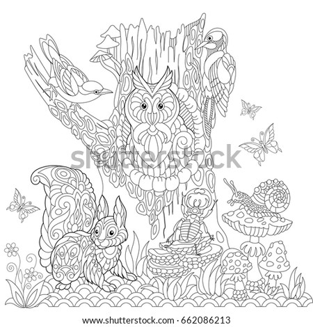 Coloring Book Page Of Forest Landscape Owl Cuckoo Bird Woodpecker Squirrel