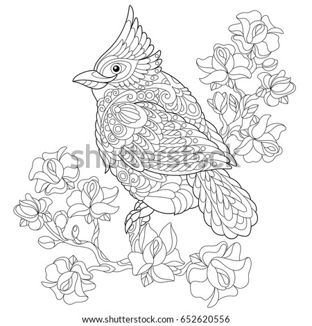 Coloring Book Page Northern Red Cardinal Stock Vector