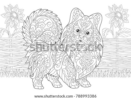 Coloring Page Adult Coloring Book Pomeranian Stock Vector
