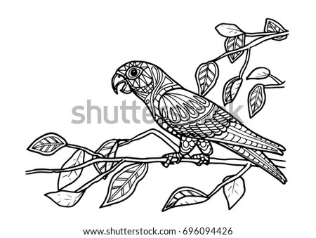 Coloring Page Book Parrot Bird Color Stock Vector 696094426