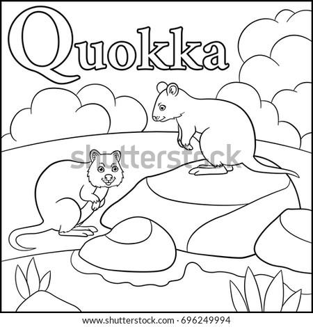 Quokka Immagini stock immagini e grafica vettoriale royalty free