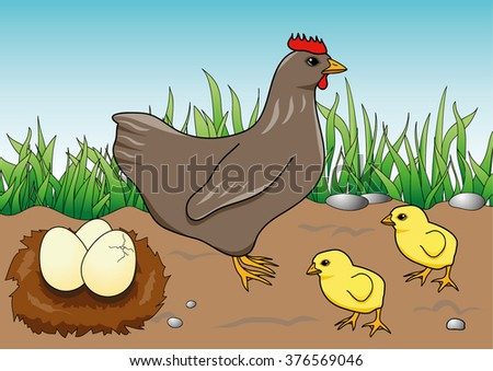 Coloring Page Hen Chicken Stock Vector 376569046