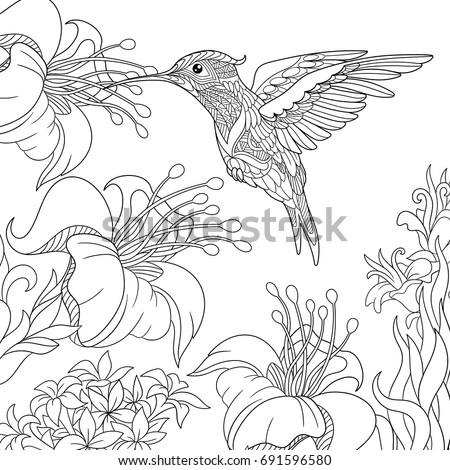 Coloring Page Of Hummingbird And Hibiscus Flowers Freehand Sketch Drawing For Adult Antistress Colouring Book