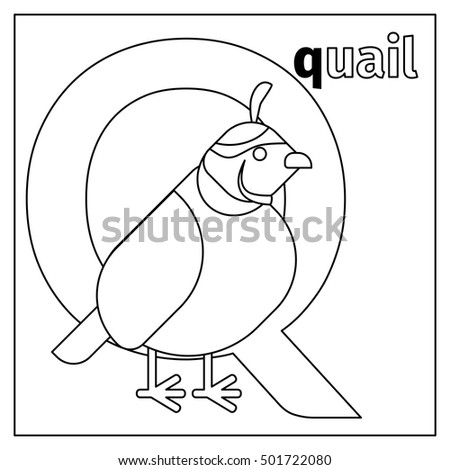 animal with letter q stock images royalty free images amp vectors 4782