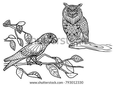 Coloring Page Owl Bird Mandala Stock Vector 793012330 - Shutterstock