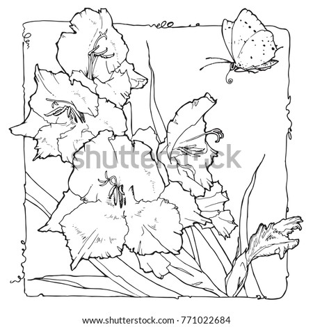 coloring page with gladiolus and butterfly in decorative frame