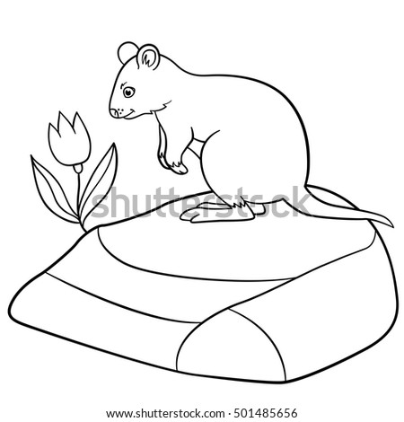 Coloring Pages. Little Cute Quokka Stands On The Stone And Looks At The  Flower.