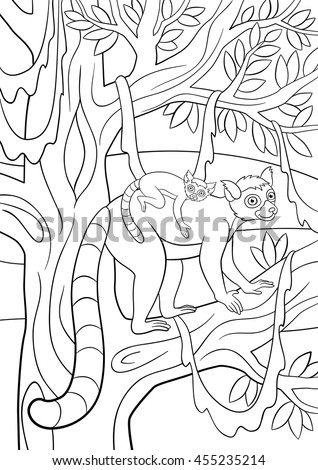 Smiling lemur stock photos royalty free images for Ring tailed lemur coloring pages