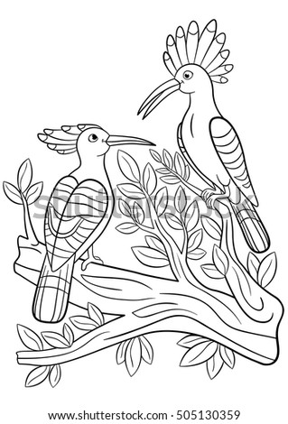 Coloring Pages Two Cute Beautiful Hoopoes Sit On The Tree Branch And Smile