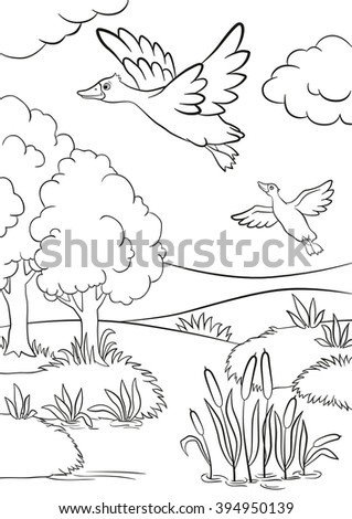 Coloring Pages Two Ducks Fly Under The Lake In Forest