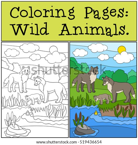 Coloring Pages: Wild Animals. Mother and father wolf look at their little cute baby.