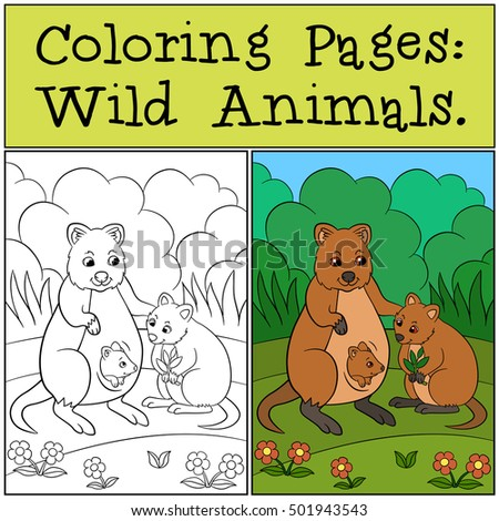 Coloring Pages Wild Animals Mother Quokka Stock Vector 501943543