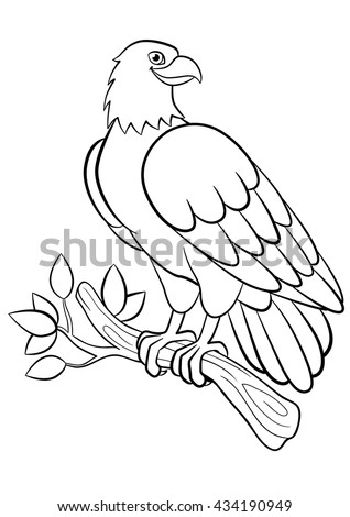 Coloring Pages Wild Birds Cute Smiling Eagle Sits On The Tree Branch