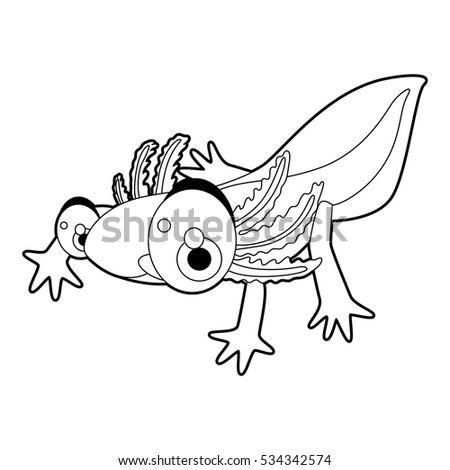 Axolotl Illustration Stock Images Royalty Free Images Vectors