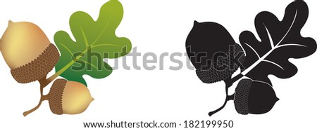 colour and black and white illustration of an acorn and oak leaves - stock vector