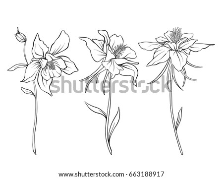 Columbine Flowers Set Of Outline