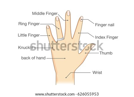 Common Names Fingers Hand Illustration About Stock Vector 626055953