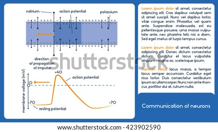 Communication neurons 1 diagram membrane voltage stock vector communication of neurons 1 diagram with membrane voltage ccuart Choice Image
