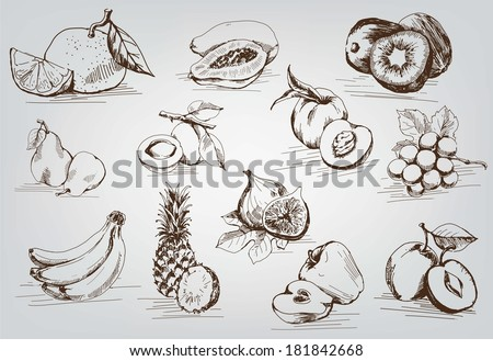 compilation of vector sketches of fruit - stock vector