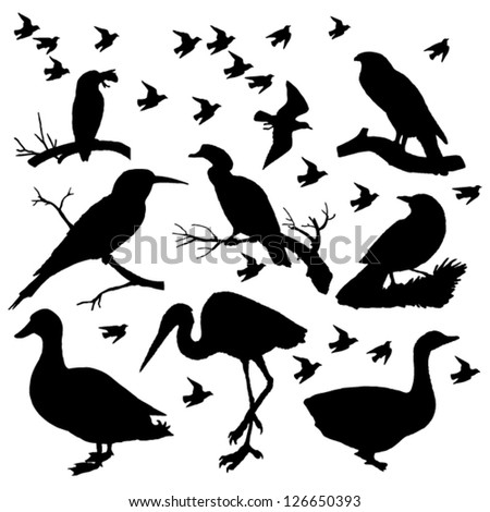 composition birds silhouettes