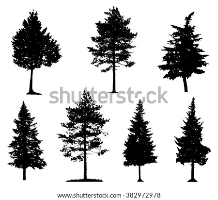 Coniferous Trees Silhouettes - stock vector
