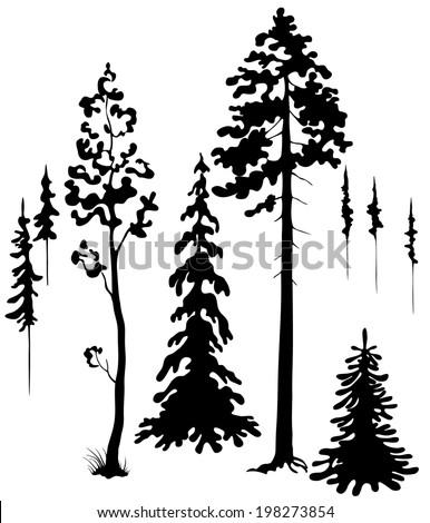 Coniferous trees silhouettes set. - stock vector