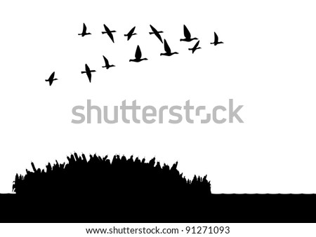 Contour illustration. A flock of wild ducks flying over the lake. Black and white illustration. - stock vector