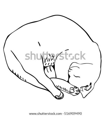 How to draw a cartoon sleeping cat