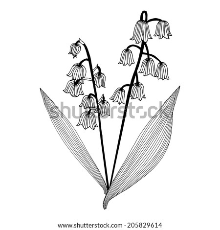 Convallaria majalis or lily of the valley or lily-of-the-valley template - stock vector