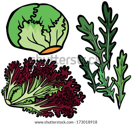 Cool Lettuce Selection Set: Rocket, Red Coral and Iceberg - stock vector