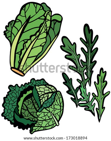 Cool Lettuce Selection Set: Rocket, Savoy Cabbage and Romaine - stock vector
