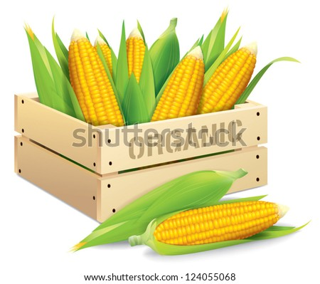 Corn box vector illustration isolated on white background