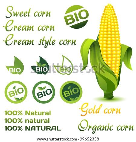 Corn organic set - stock vector