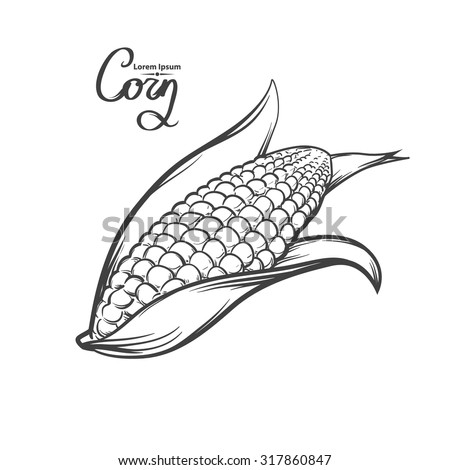 corn, outline style, for menu, simple illustration