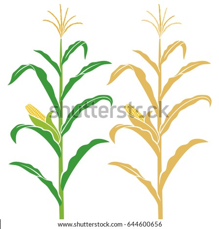 corn stalk vector illustration stock photo photo vector rh shutterstock com corn stalk clip art free corn stalk clip art free