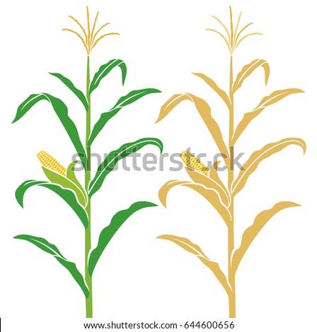 corn stalk vector illustration stock photo photo vector rh shutterstock com corn stalk bundle clipart
