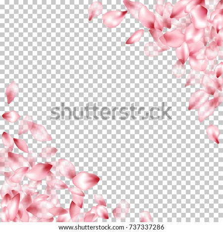 Corner Borders Of Flying Petals Isolated On Transparent Grid Invitation Background Flower Parts Wedding Decorative