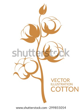 Cotton Boll Stock Images, Royalty-Free Images & Vectors | Shutterstock