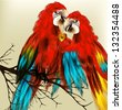 Couple of parrot  with golden heart symbol of love - stock photo