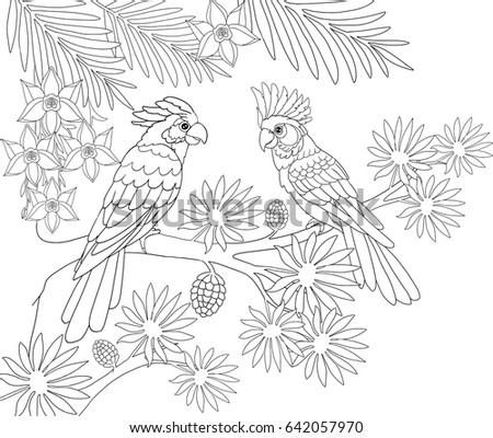 couple of parrots sitting in the jungle on a palm tree page for coloring book line - Palm Tree Branches Coloring Pages