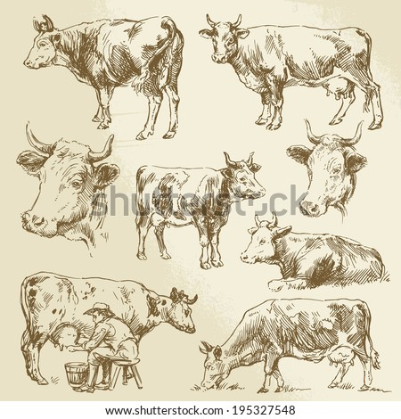 cow, cows, farm animals - stock vector