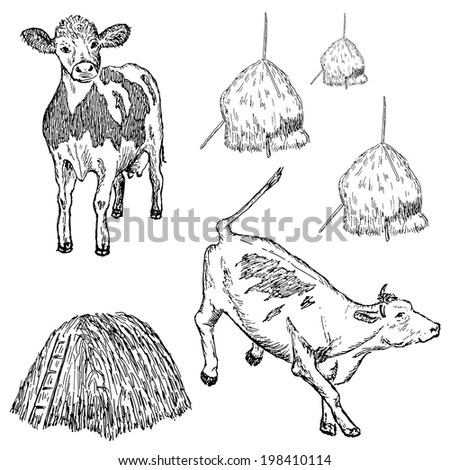 cow. hand drawing set of vector sketches - stock vector