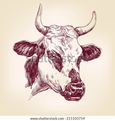 cow hand drawn vector llustration realistic sketch - stock vector