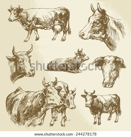 cows, farm animal - hand drawn collection - stock vector