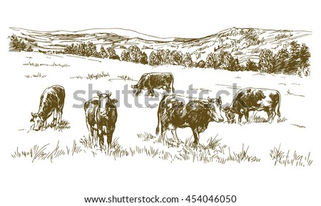Cows grazing on meadow. Hand drawn illustration. - stock vector