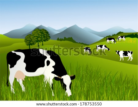 Cows in a meadow - stock vector