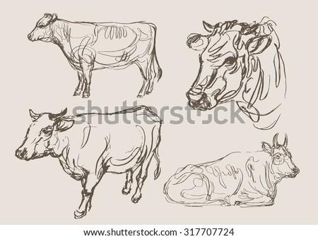 cows vector, hand draw sketch  - stock vector