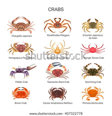 Crabs vector set in flat style design. Different kind of crab species icons  collection.