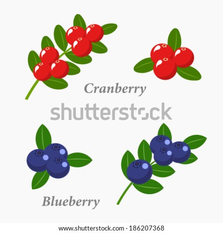 Cranberries and blueberries. Berry fruit vector illustration - stock vector